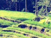 went Bali Julia, jours famille Sortez votre zone confort