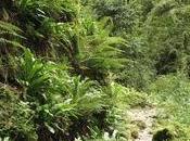 Protéger forêts âgées pyrénéennes, pourquoi, comment?