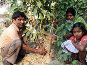 Inde, mangues pour sauver femmes