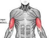 Exercices pour muscler biceps (sans poids ,sans haltère)