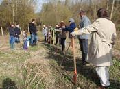 Plantation d'arbres Picardie