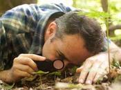 dans d'une forêt David Haskell