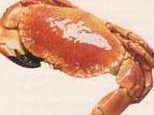Ravioles crabe vermouth thym frais