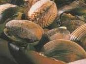 Zéphir noix coquille Saint-Jacques carottes fondantes, velouté corail d'oursins