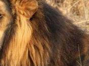 African Safari Critique