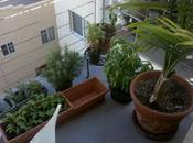 Planter faire pousser basilic