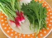 premiers radis salade jardin