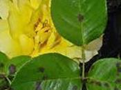solutions pour éradiquer maladies plantes jardin