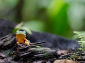 péninsule d'Osa, écotourisme Costa Rica