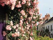 Pour célébrer Fête Mères, chantez leur 'Chedigny roses'*