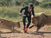 Petite partie foot avec lions sauvages