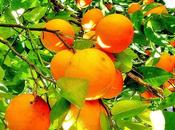 L'aube lève avec orangers crépuscule