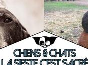 Chiens chats dorment n'importe