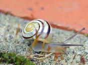 comptage escargots votre jardin, c'est été...