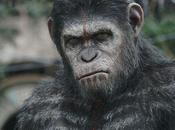 planète singes L'affrontement