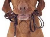 MODE VIE: Vivre avec chien, c'est faire moins Preventive Medicine