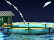 Greenpeace: film d'animation problématique surpêche