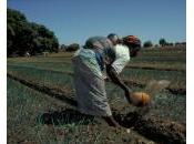 Financement chaîne valeur: productivité agricole