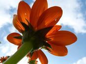 Folie fleurs féérie couleurs