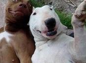 animaux aussi droit leur selfie