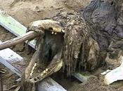 Retour cadavre d'une étrange créature découverte Russie