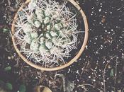 Dans cactus #aie #VSCOcam #green #cactus...