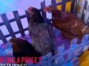 L'oeuf poule avec Capucine Anav, Zaho, Florent Mothe, Benoit Dubois