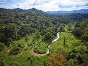 Ciudad Blanca, cité Dieu Singe aurait découverte Honduras