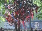 L'arbre cadenas kaluga