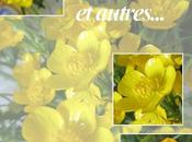 Couleur Boutons d'or