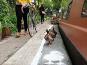 nouvelle assez insolite Londres voie réservée canards bord canal