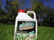 Ségolène Royal demande jardineries plus vendre Roundup Monsanto