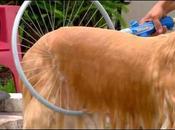 Woof Washer 360, l'outil pour laver chien