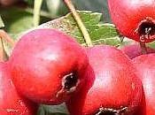 produits forestiers comestibles forêt québécoise