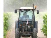 Pourquoi l'usage pesticides est-il scandale économique
