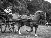 cheval breton concours d'attelage Landudec noir blanc photos)