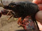 espèces invasives coûtent (très) cher France