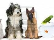 Garde domicile tous animaux compagnie (Vendée