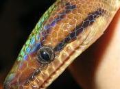 Roman: Après pluie beau temps; serpent