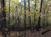 Sous-bois l'automne Montreal