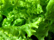 Sauce gourmande pour salade