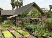 famille américaine produit tonnes nourriture dans jardin