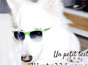 Comment tester l'intelligence chien