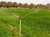 Biskra: nouveaux périmètres agricoles destinés grands investissements