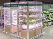 demain légumes poussaient dans magasins