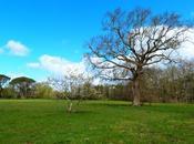 ARBRES TREES Domaine Certes-Biganos) Bassin d'Arcachon