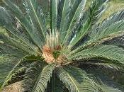 naissance d'un palmier