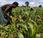 """multinationales payaient leurs impôts, l'Afrique n'aurait besoin d'aucune aide"""""""