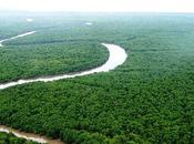 propos forêt atlantique