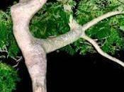 Vagabonde graine, terre l'arbre